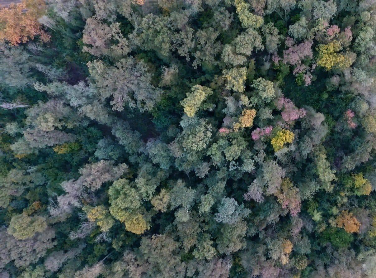 Il bosco  antico